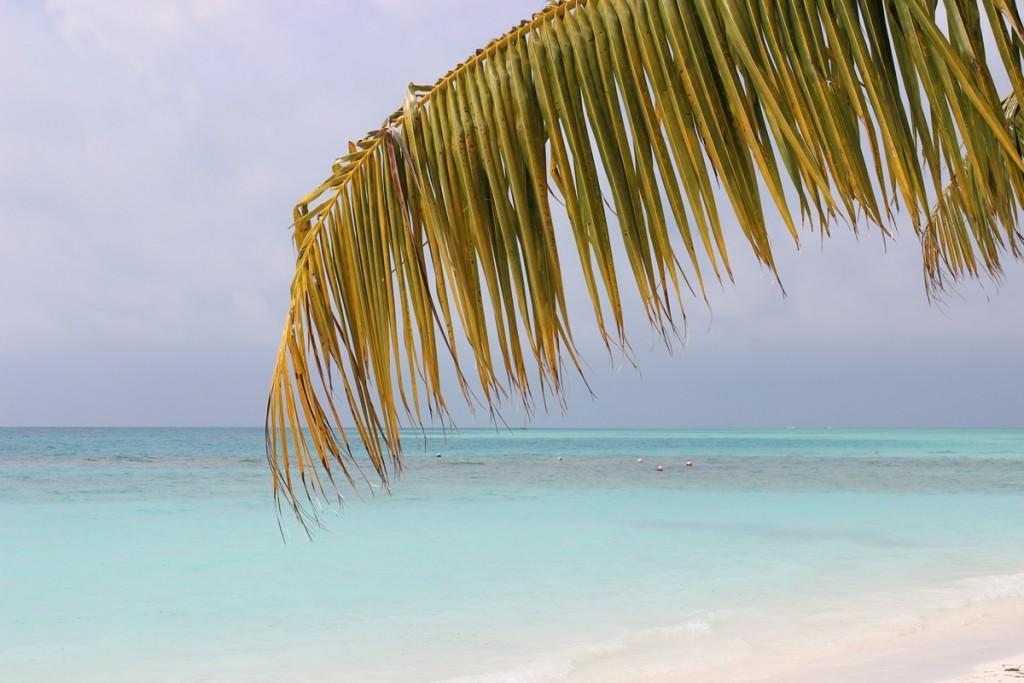 Dive Time Paradise Malediven Maldives Meeru Island Resort Palmtree