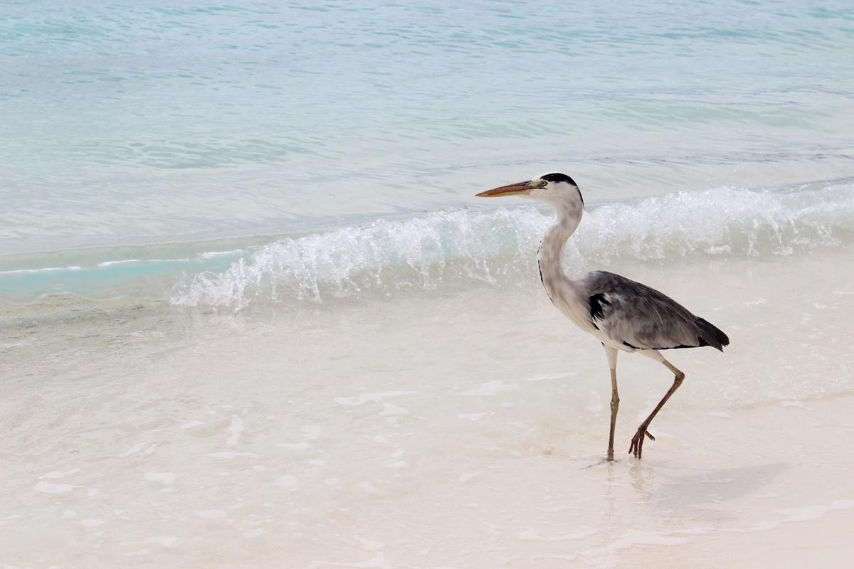 Honeymoon Maldives Meeru Island 20